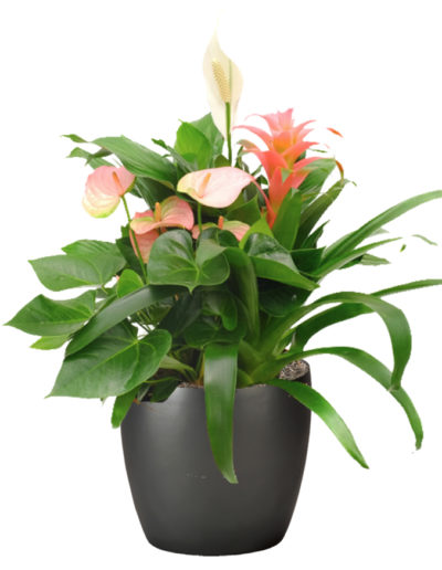 Blooming Exotic Mix
