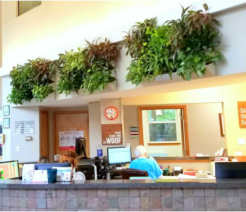 Interior Landscaping Design Installation And Maintenance Heroman Services Plant Company
